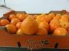 Fruta-Fresca-05