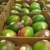 Inka Mango