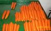 Agrobastan Carrots